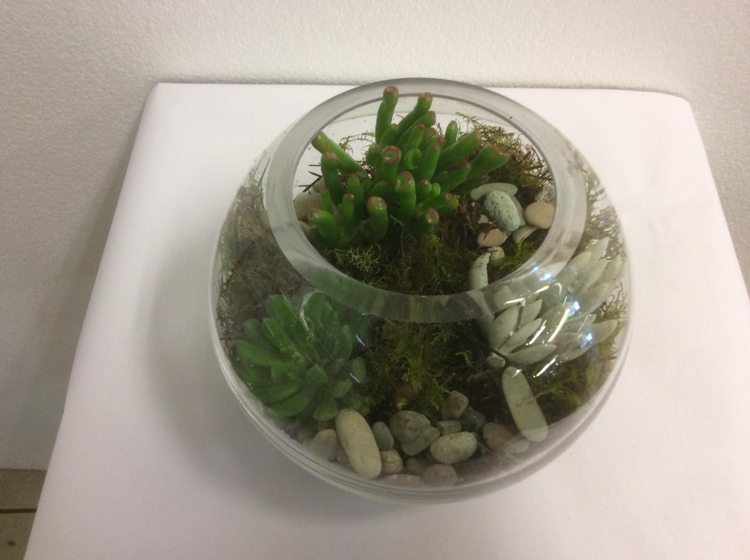 Fish Bowl Terrarium Joan O Reillys Lilydale Florist